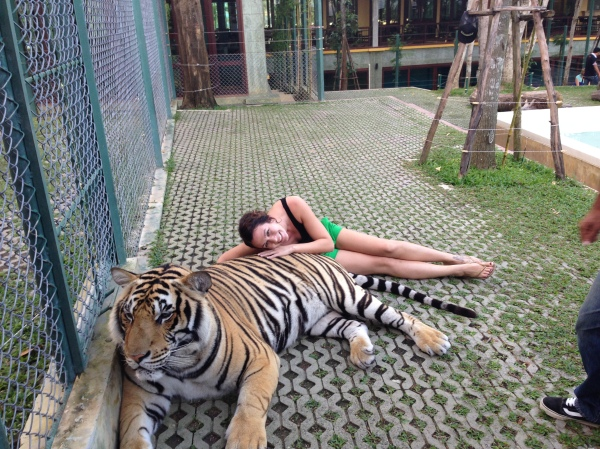 Tigers_Thailand